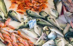 perierga.gr - Fish Guide: Πόσο καλά γνωρίζετε τα ελληνικά ψαρικά;