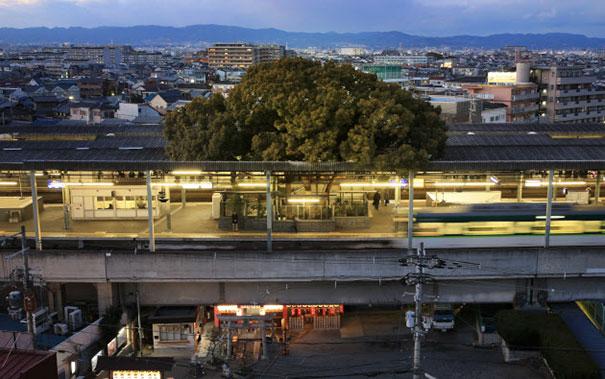 perierga.gr - Δέντρο αναπτύσσεται σε σιδηροδρομικό σταθμό εδώ και 700 χρόνια!