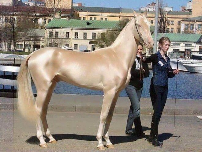 perierga.gr - Tο πιο λαμπερό άλογο στον κόσμο!