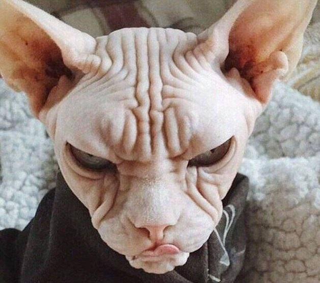 perierga.gr - Τα πιο θυμωμένα ζώα στον κόσμο!