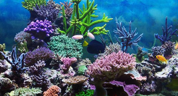perierga.gr - Ο Αμαζόνιος έχει κοραλλιογενή ύφαλο!