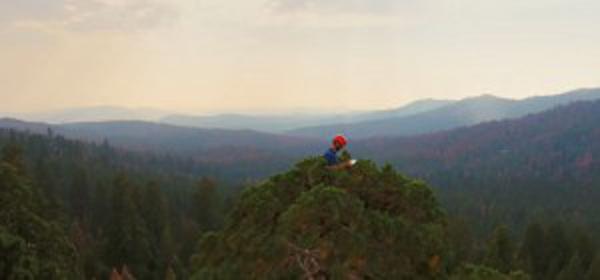Perierga.gr-Οι επιστήμονες που προσπαθούν να σώσουν τα αρχαιότερα και ψηλότερα δέντρα του πλανήτη