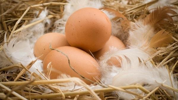 perierga.gr - Άγνωστες χρήσεις του αυγού!