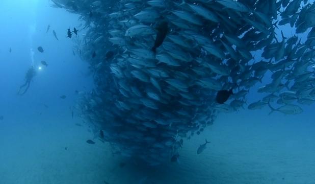 "perierga.gr - Απίθανος ""ανεμοστρόβιλος"" ψαριών στο βυθό!"