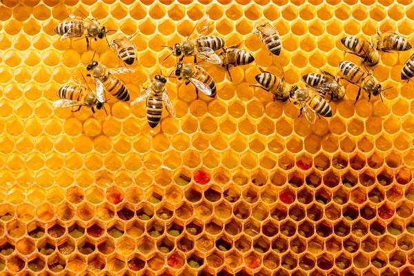 "perierga.gr - Όταν οι μέλισσες εκπλήσσονται... ""ξεφωνίζουν""!"
