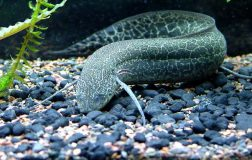 perierga.gr - Παράξενο ψάρι ζει στην ξηρά!