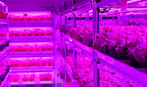 perierga.gr - Εσωτερικός κήπος παράγει 80 τόνους λαχανικών τον χρόνο!