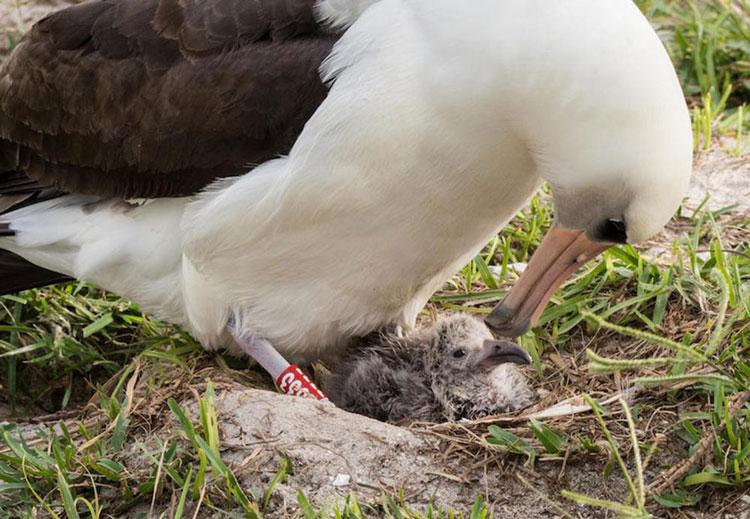 perierga.gr - Το γηραιότερο πουλί του κόσμου έγινε μητέρα στα 66!