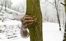 """perierga.gr - Γλυπτό χέρι """"πιέζει"""" κορμό δέντρου!"""