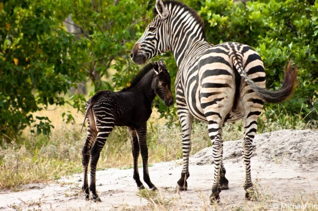 perierga.gr - Ασυνήθιστα ζώα με μαύρο τρίχωμα!