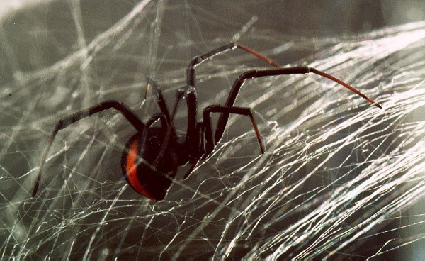 perierga.gr - Οι αράχνες τρώνε... 800 εκ. τόνους εντόμων κάθε χρόνο!