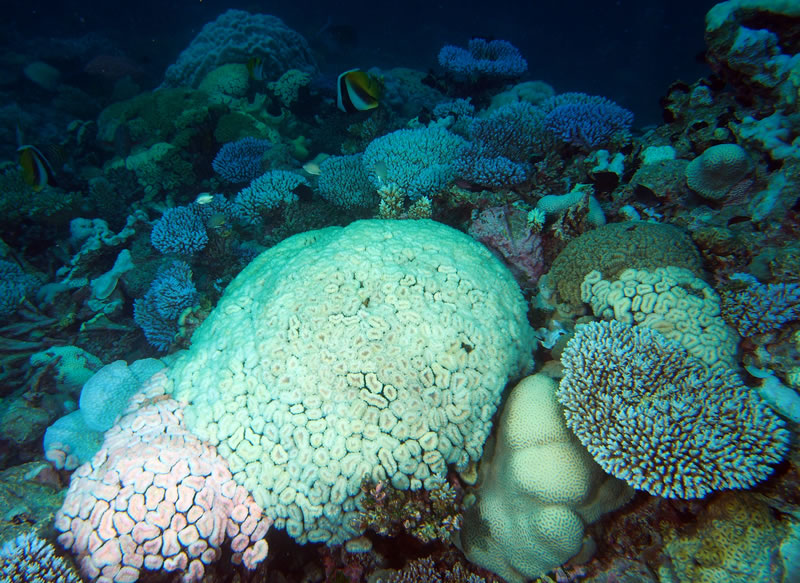 perierga.gr - Η ζέστη ξεβάφει τα κοράλλια!