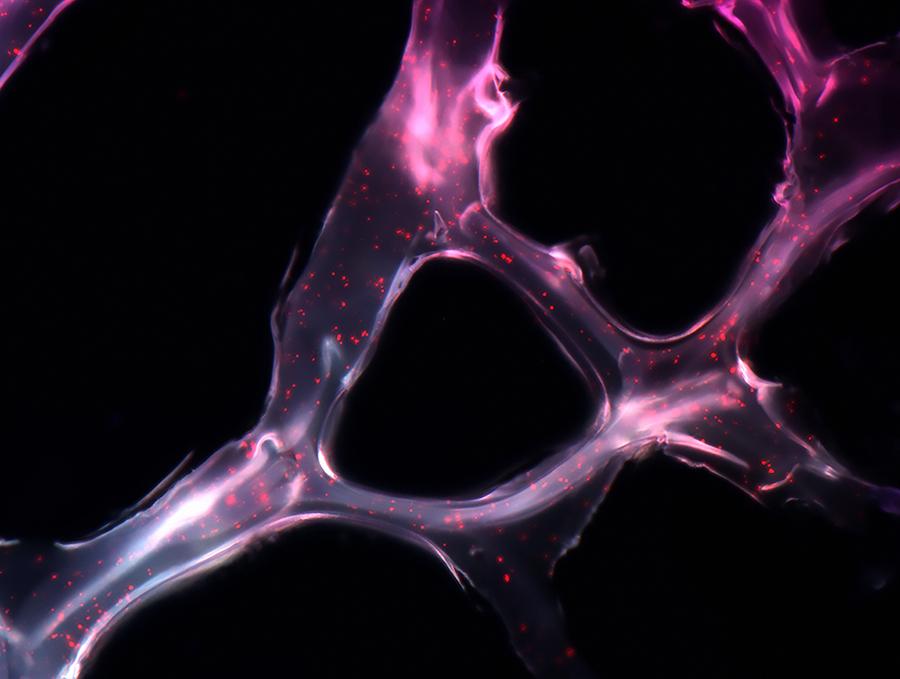 perierga.gr - Πειράματα της Βιολογίας σε υπέροχες εικόνες!