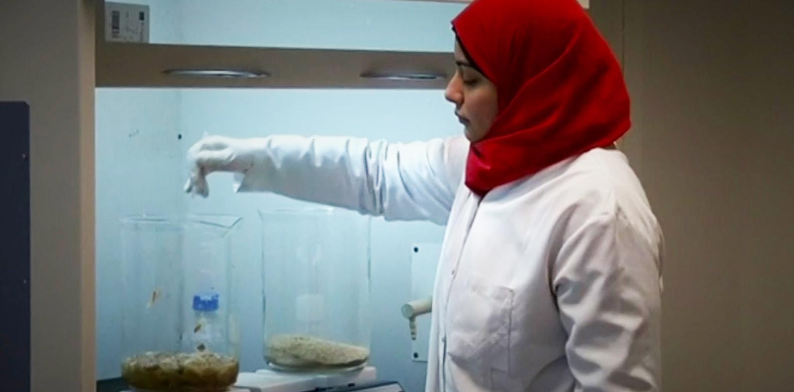 perierga.gr - Ερευνητές δημιούργησαν πλαστικό από κελύφη καρκινοειδών!