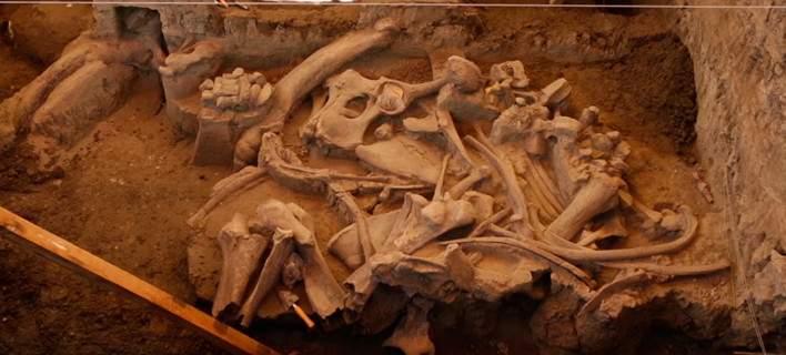 perierga.gr - Ανακάλυψαν μαμούθ που έζησε πριν 14.000 χρόνια!