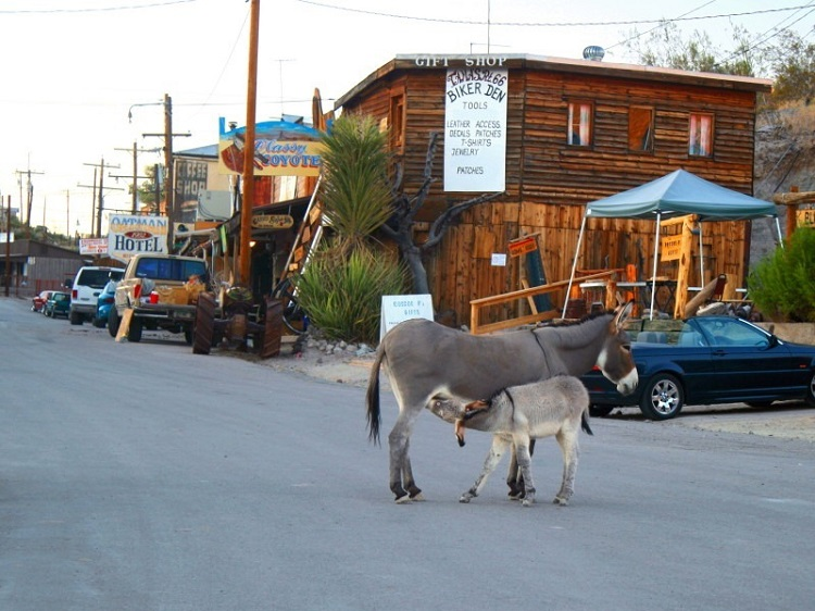 perierga.gr - Γαϊδουράκια περιπλανιούνται στους δρόμους της πόλης!