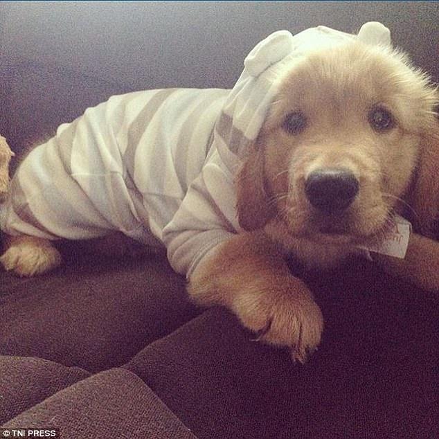 Σκυλιά φοράνε πιτζάμες και είναι αξιολάτρευτα!