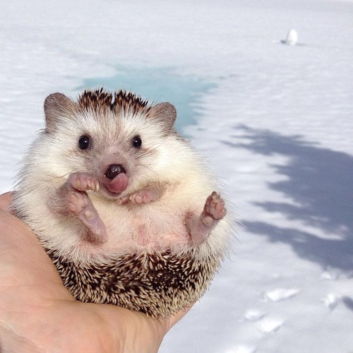 perierga.gr - Αξιολάτρευτα ζώα βγάζουν την γλώσσα τους στο φακό!