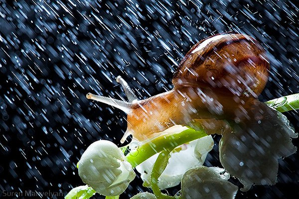 perierga.gr - Σαλιγκάρια στην βροχή!