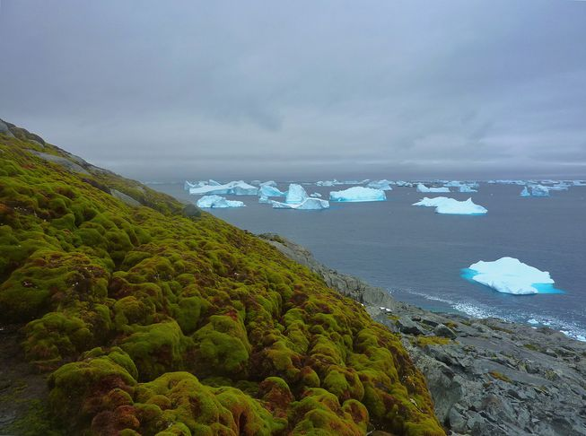 "perierga.gr - Η υπερθέρμανση του πλανήτη ""πρασινίζει"" την Ανταρκτική!"