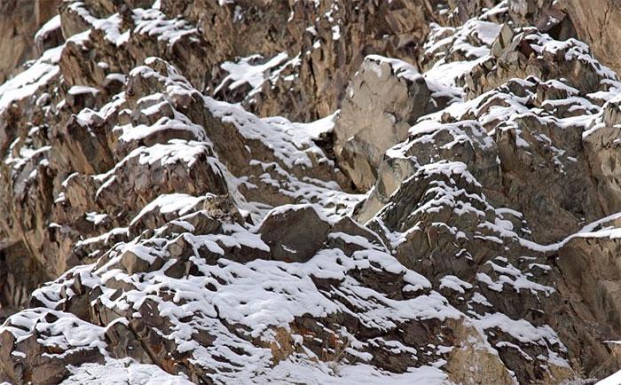 perierga.gr - Ζώα καμουφλάρονται και παίζουν... κρυφτό!