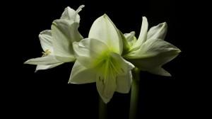 perierga.gr - Η υπέροχη άνθιση των λουλουδιών σε ένα βίντεο!