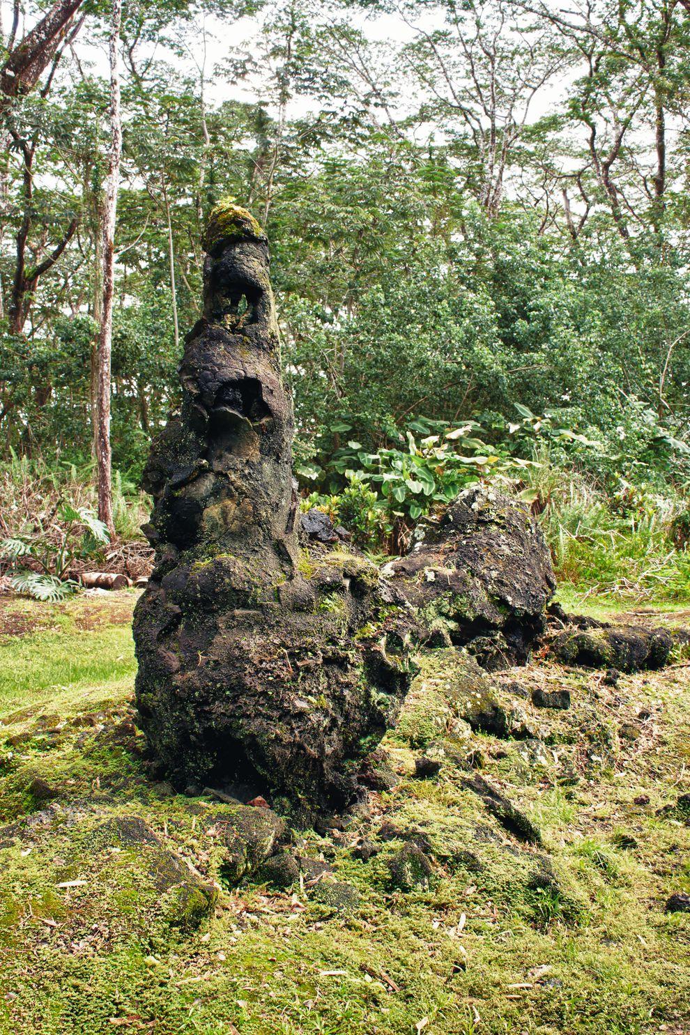 perierga.gr - Τα παράξενα δέντρα λάβας στη Χαβάη!