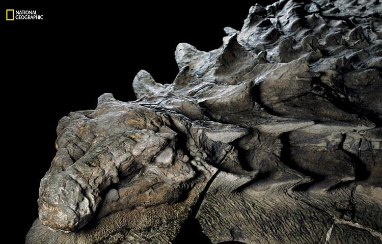 perierga.gr - Ανακαλύφθηκε το σημαντικότερο εύρημα δεινοσαύρου!