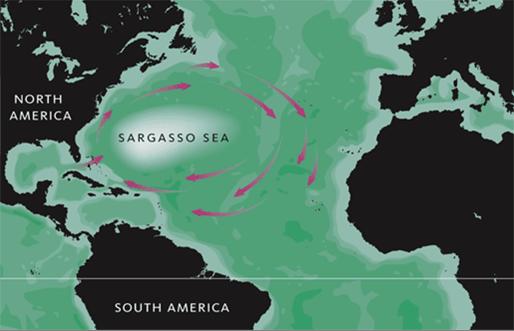 perierga.gr - Στα Δυτικά το όριό της καθορίζεται από το Ρεύμα του Κόλπου, στα Βόρεια από το Βορειοατλαντικό ρεύμα, Ανατολικά από το ρεύμα των Καναρίων και Νότια από το Ισημερινό ρεύμα του Βόρειου Ατλαντικού.