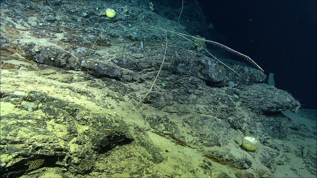 perierga.gr - Σαρκοφάγο σφουγγάρι ανακαλύφθηκε στον ωκεανό