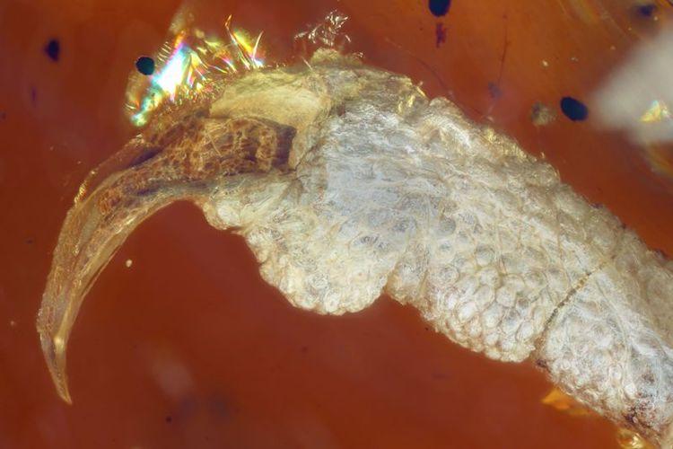 perierga.gr - Επιστήμονες ανακάλυψαν νεοσσό 100 εκ. ετών μέσα σε κεχριμπάρι!