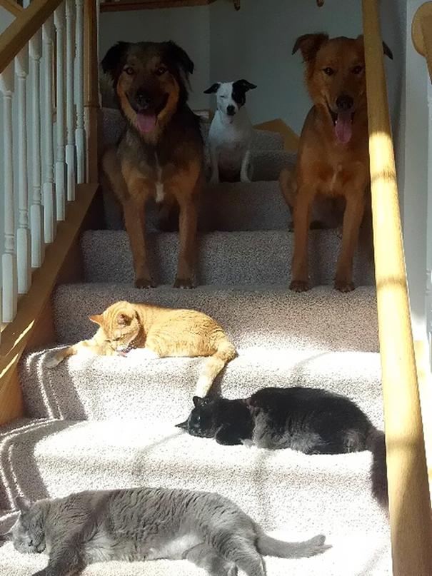 perierga.gr - Οι γάτες αγαπούν τον ήλιο!