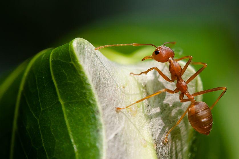 perierga.gr - Τα μυρμήγκια μπορούν να βοηθήσουν τους αγρότες να βγάλουν περισσότερα χρήματα!