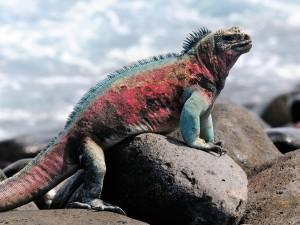 12 ασυνήθιστα ζώα που ζουν στα Γκλαπάγκος!