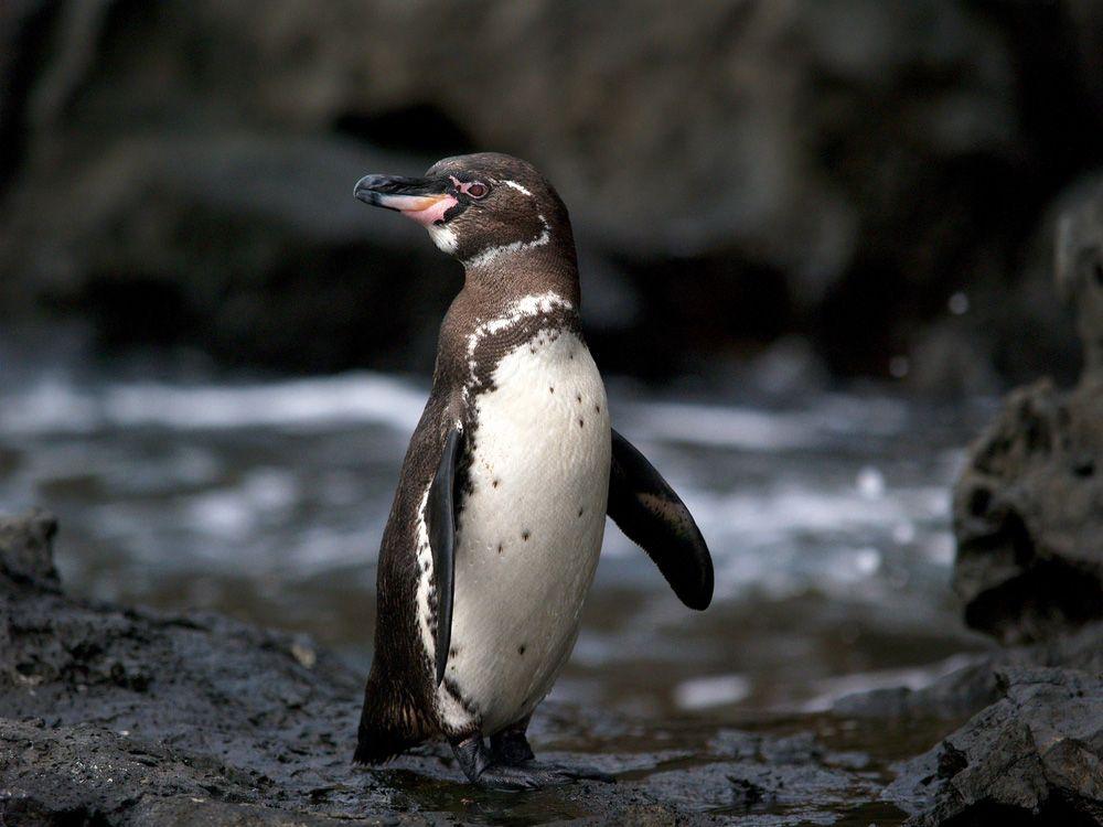 perierga.gr - 12 ασυνήθιστα ζώα που ζουν στα Γκλαπάγκος!