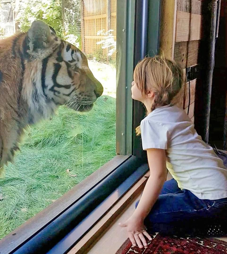 perierga.gr - Μια βραδιά με τις τίγρεις...