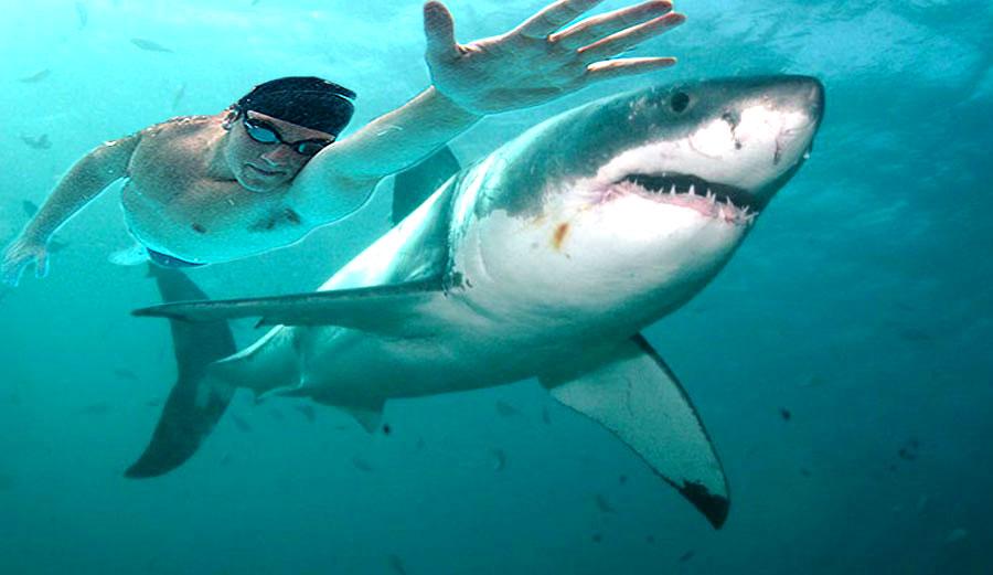 perierga.gr - Ο Φέλπς έκανε κόντρα με λευκό καρχαρία και έχασε!