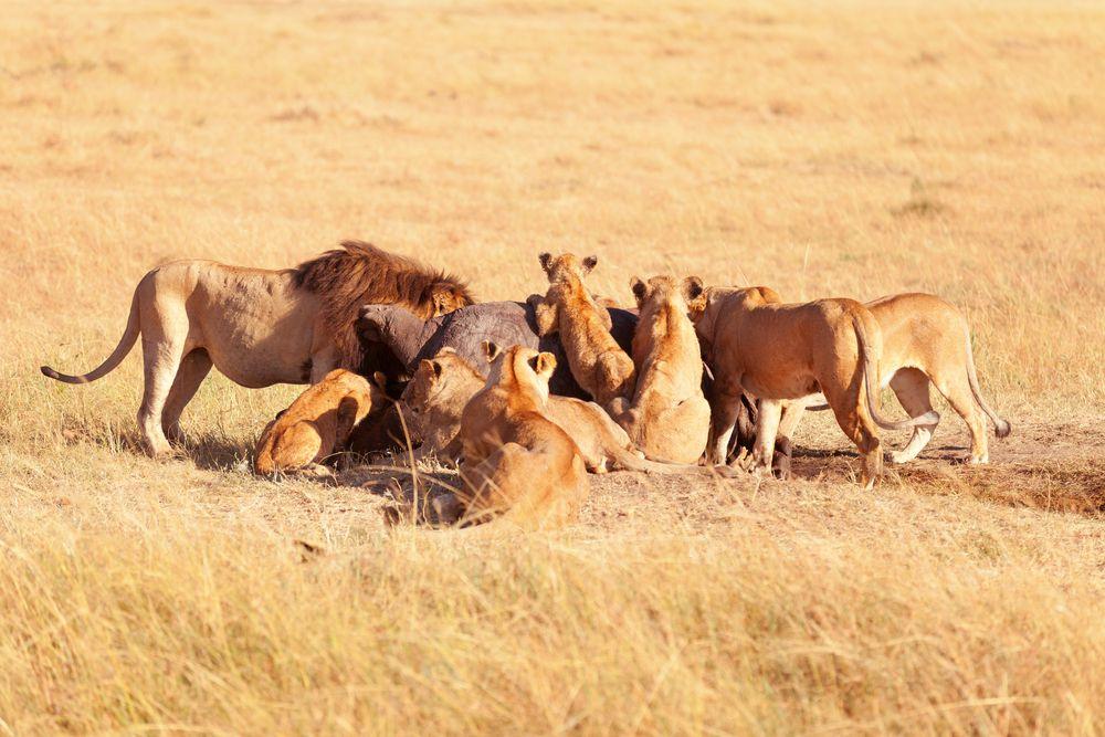 perierga.gr - Ζώα που τους αρέσει να τρώνε με παρέα!