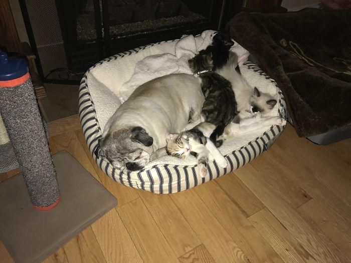 perierga.gr - Γάτες & σκυλιά ζουν μαζί!