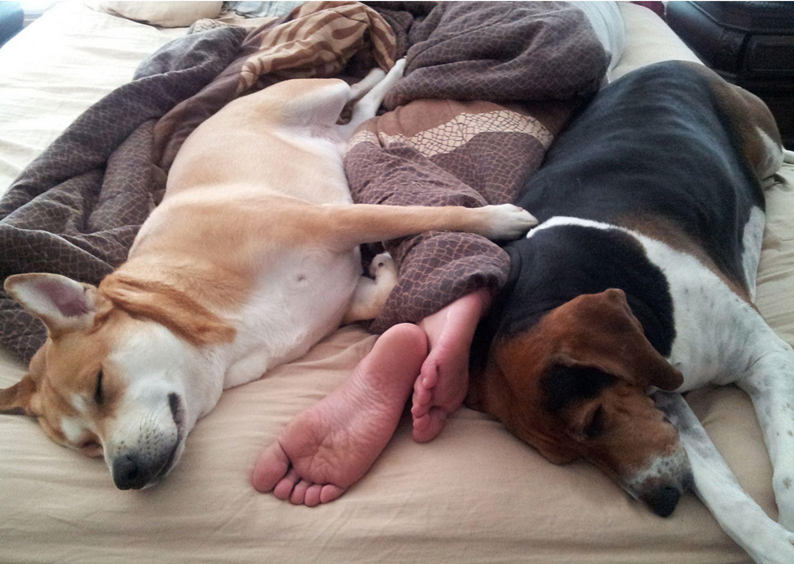perierga.gr - Γιατί πρέπει να κοιμόμαστε με τον σκύλος μας;