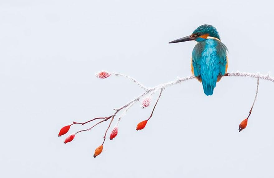 perierga.gr - Οι ωραιότερες φωτογραφίες πτηνών 2017