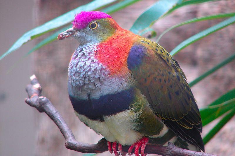 perierga.gr - Περιστέρι γεμάτο... χρώματα!