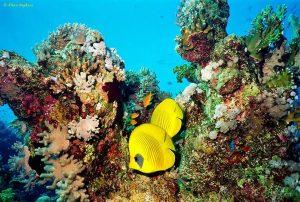6 πράγματα που δεν ξέρουμε για τους κοραλλιογενείς υφάλους