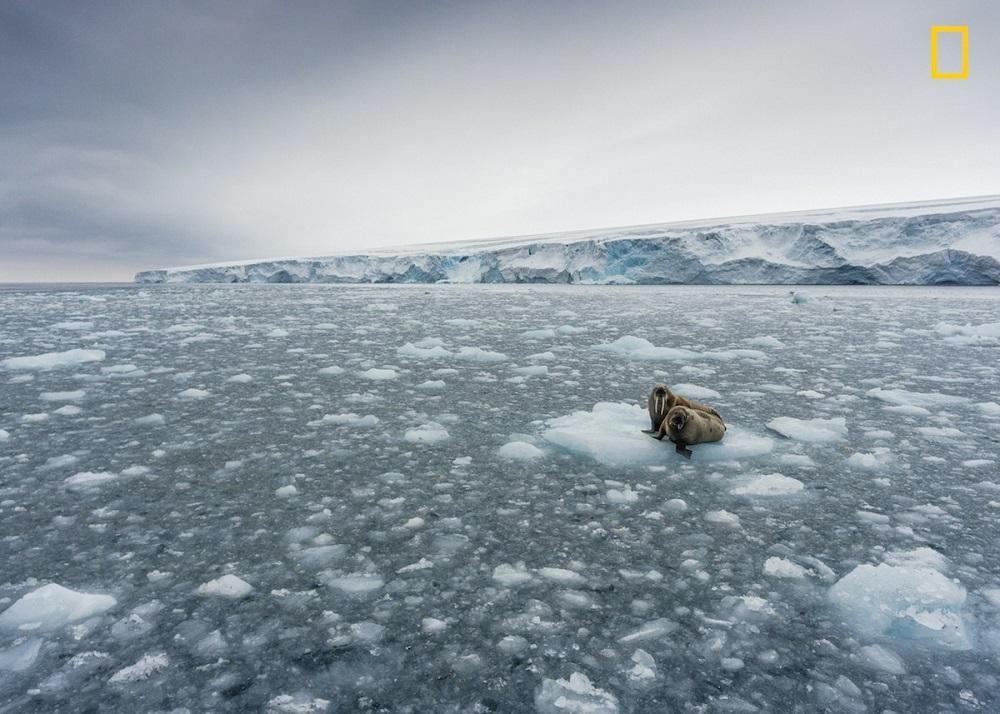 perierga.gr - Οι νέες συμμετοχές στον Διαγωνισμό του National Geographic είναι ακόμα πιο εντυπωσιακές!