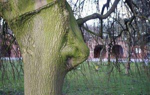 Δέντρα με παράξενο σχήμα αποκτούν... ζωή!