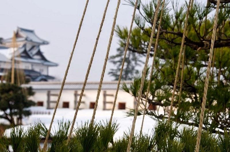 perierga.gr - Παράξενη ιαπωνική τεχνική προστασίας των δέντρων από το βάρος του χιονιού!