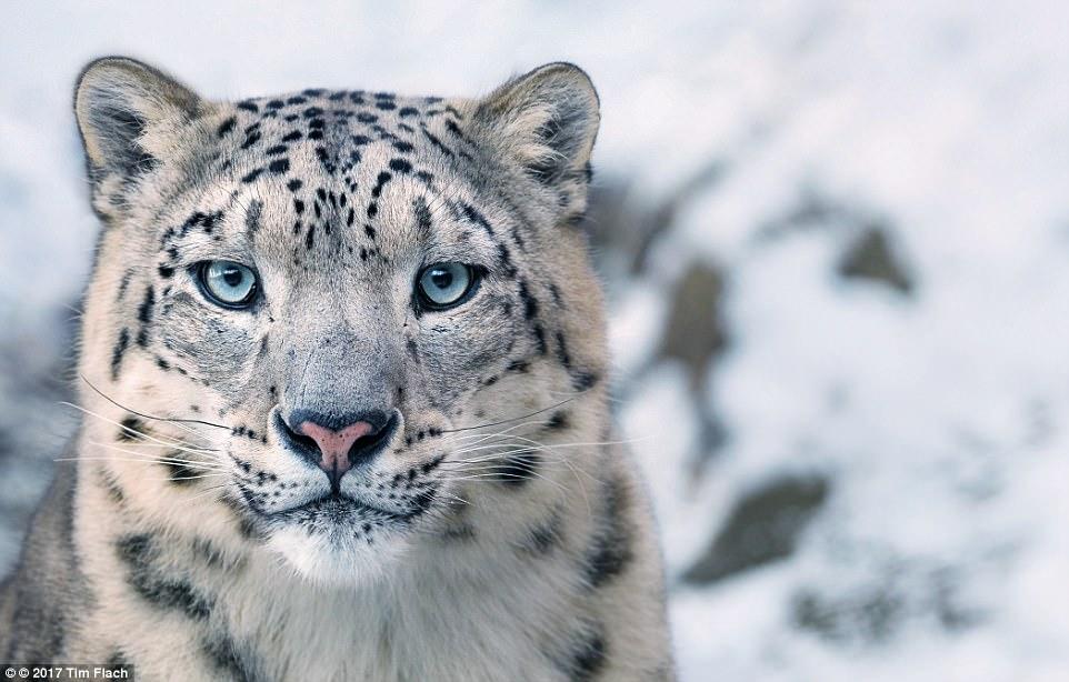 perierga.gr - Υπέροχες εικόνες από είδη ζώων που είναι προς εξαφάνιση