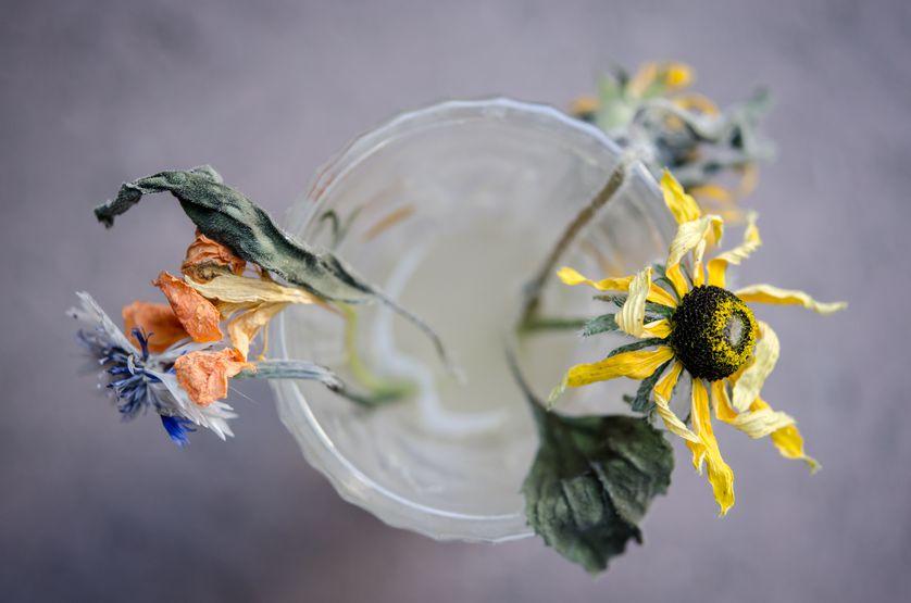 perierga.gr - Χρήσιμα κόλπα για να διαρκέσουν περισσότερο τα λουλούδια στο βάζο!