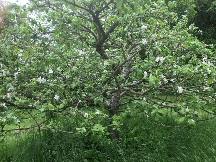 perierga.gr - Η μηλιά του Νεύτωνα