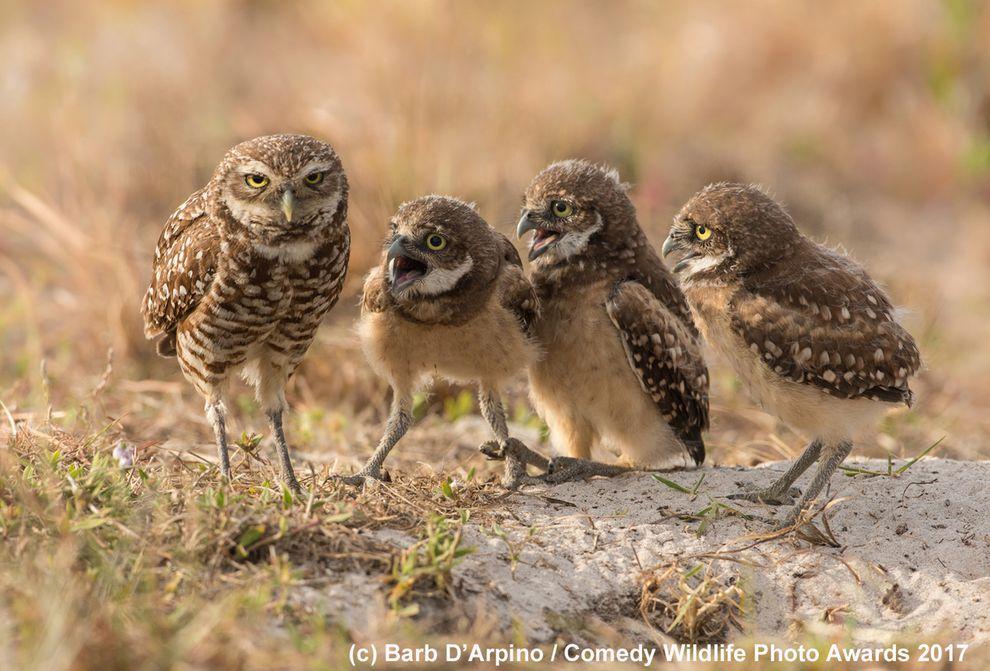 perierga.gr - Αστείες εικόνες από την άγρια ζωή συμμετέχουν στον πιο... χιουμοριστικό διαγωνισμό!
